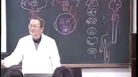 哈医大系统解剖学 28运动传导通路