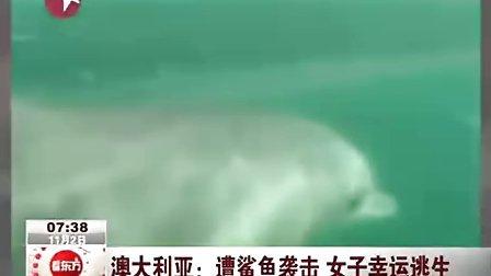 女子潜水看海豚遭鲨鱼袭击 幸运逃生