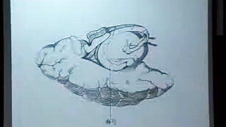 哈医大系统解剖学 22端脑