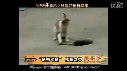 """""""猫怕老鼠"""" 情理之中"""