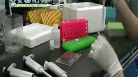 Western blot视频:蛋白浓度测定