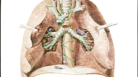 淋巴系统 人卫版