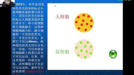 超清人教版高中生物必修一第四章第二节生物膜的流动镶嵌模型