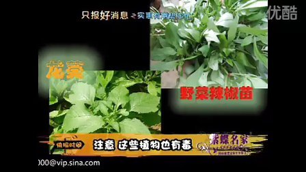 注意这些植物也有毒