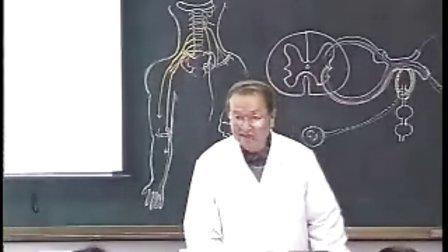 哈医大系统解剖学 24脊神经