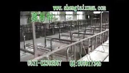 建设中自然养猪法母猪舍