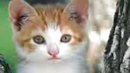 搞笑视频-猫猫的自白_标清