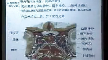 哈医大系统解剖学 23脑和脊髓的被膜、血管