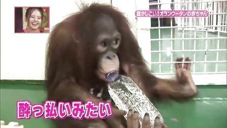天才!志村どうぶつ園 - 生まれたて超かわいい赤ちゃん動物!大集合スペシャル!!