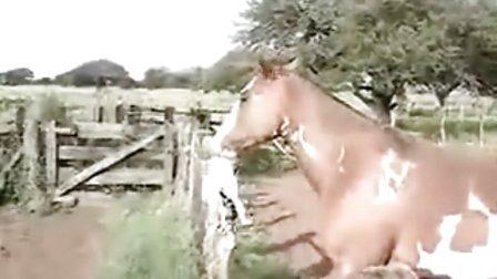 搞笑动物 见过马玩猫吗?
