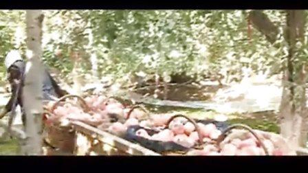 红旗坡阿克苏冰糖心苹果介绍-优果网