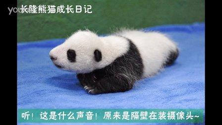 熊猫日记第74集