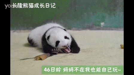 熊猫日记第75集