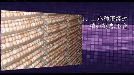 土鸡苗 土鸡 鸡苗 绿壳蛋鸡苗 土鸡蛋 养殖技术(自生源土鸡)