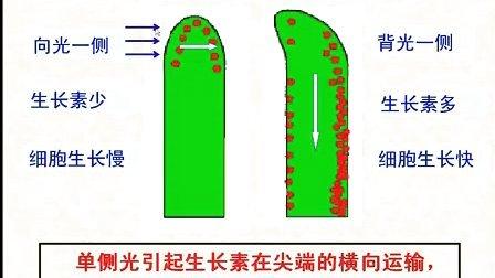 汉水丑生  高中生物 必修三 第三章 生长素的发现