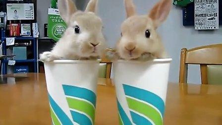 可爱的双胞胎兔子