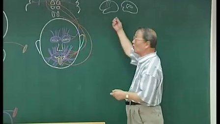 下行传到路 (哈尔滨医科大学系统解剖学教学视频)