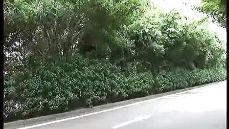"""实拍深圳流浪汉树上筑""""鸟巢""""蜗居"""