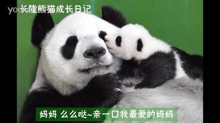 熊猫日记第77集