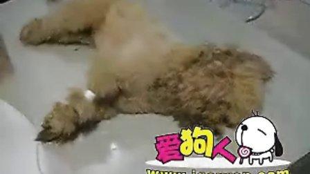 桂林一住户不满下毒毒死3只狗狗(图视频)