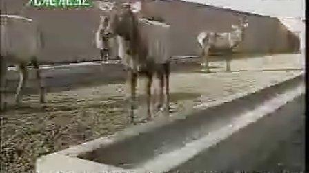 鹿茸加工价格
