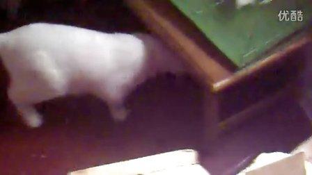 猫兔黑白配
