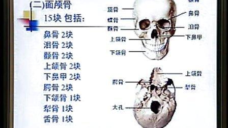 系统解剖学 02