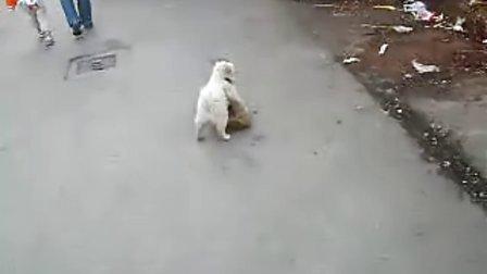 小区里有一只好玩的小狗