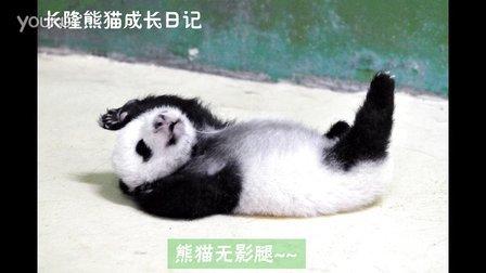 熊猫日记第81集
