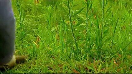 济州, 挑战新世界7大自然奇迹