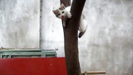 上树容易下树难