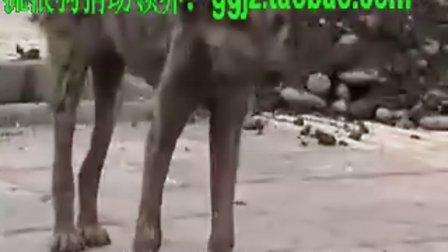 【流浪狗领养】 流浪狗被蜱虫叮咬、可怜