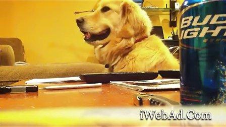 狗狗爱吉他