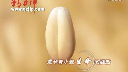 精力沛 专注小麦胚芽三十年 真正的天然、安全、营养、优质