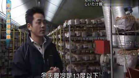 [來去北海道特集][特賞椎茸香菇][84]