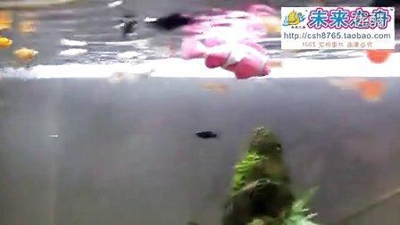 电子鱼带闪灯嘴巴会动 - 片段2