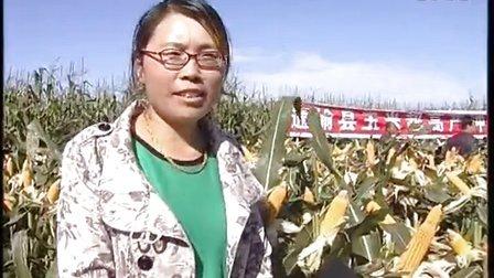 玉米超高产