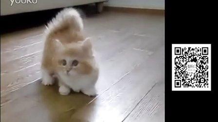 圆滚滚毛茸茸 据说这是加菲猫小时候的真实影像
