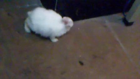 咱寝室兔爷.