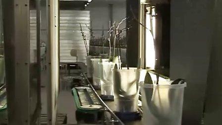 科迪马 为兰花种植者Ammerlaan Orchid 定制的物流系统