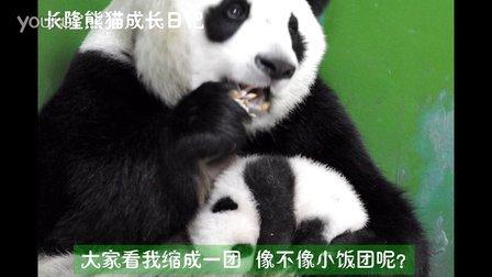熊猫日记第82集