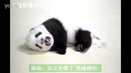 熊猫日记第84集