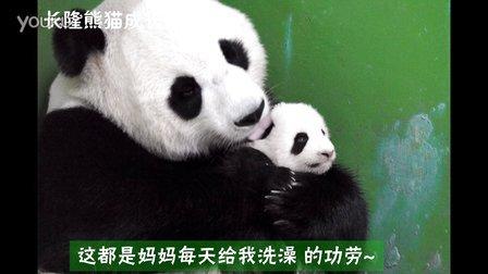 熊猫日记第83集