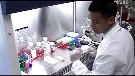 细胞粘附实验操作