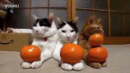 最萌猫咪排排坐分果果(非典型盐城话解说)