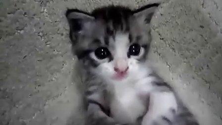 极品猫受!!!40秒开始高潮