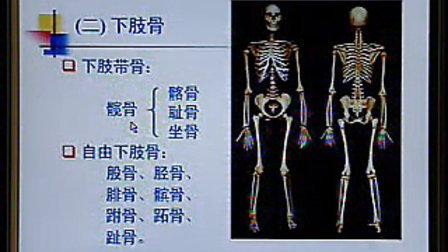系统解剖学 04