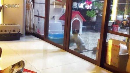 快让我进来