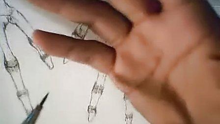 人体结构精细绘画技法150 掌间横韧带 各掌骨骨间背侧肌