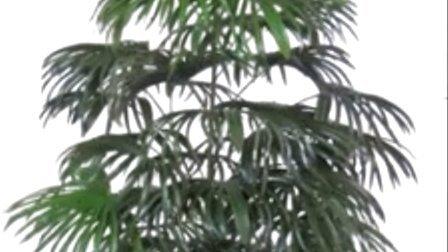 广州仿真椰子树深圳仿真椰子树江门仿真椰子树海南仿真椰子树